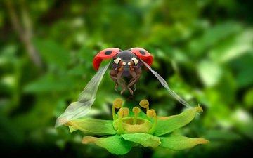 насекомое, цветок, крылья, божья коровка