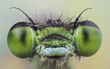 глаза, макро, насекомое, взгляд, стрекоза