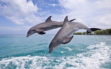 небо, берег, волны, море, прыжок, дельфины