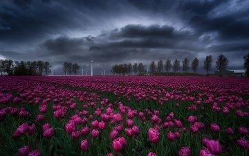 небо, цветы, деревья, тучи, поле, весна, тюльпаны