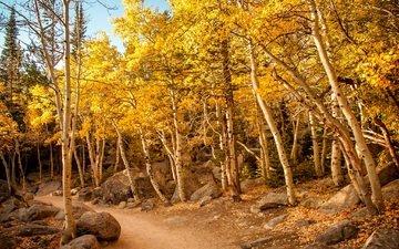 небо, деревья, камни, лес, листья, дорожка, склон, осень, тропинка