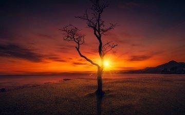 небо, солнце, дерево, закат, пейзаж