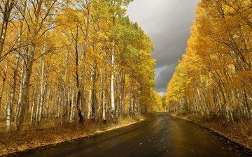 небо, дорога, природа, листья, березы, листва, осень