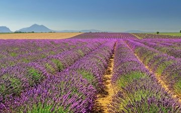 the sky, mountains, field, lavender, horizon, france, space, valensole