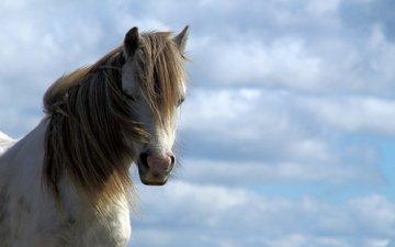 небо, лошадь, грива