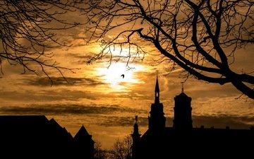 небо, ночь, дерево, пейзаж, ветки, силуэты, птица, здания