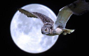 ночь, сова, полет, луна, птица