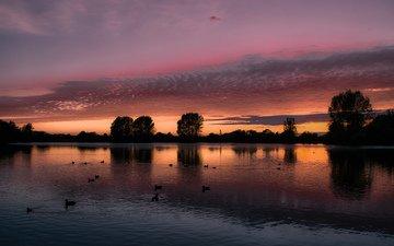 небо, облака, деревья, вечер, озеро, закат, птицы, утки, оранжевое