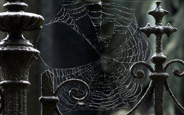 macro, drops, iron, web, fence
