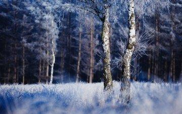 природа, дерево, лес, зима, иней
