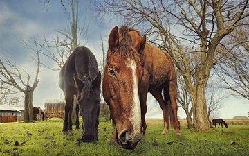 природа, фон, лошади, кони