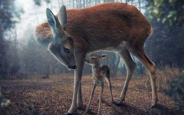 природа, олень, олени, олененок