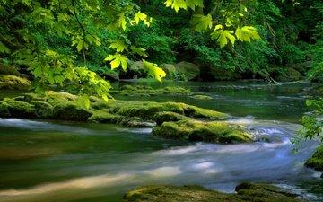 река, дерево, камни, зелень, листья, листва, мох