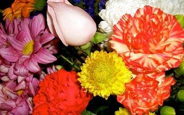 цветы, роза, лепестки, букет, хризантема, гвоздика