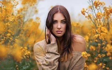 девушка, взгляд, волосы, лицо, шатенка, голубоглазая, желтые цветы