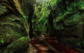 скалы, камни, зелень, ручей, мох, шотландия, finnich glen