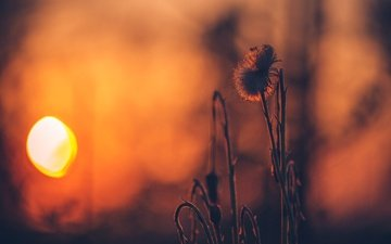 the sun, nature, plants, sunset, background, bokeh, a blade of grass