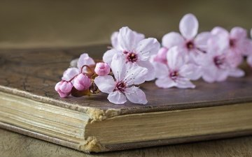 стиль, вишня, книга, цветки