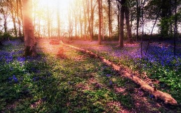 свет, цветы, деревья, лес, осень