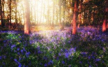 свет, цветы, деревья, лес, весна
