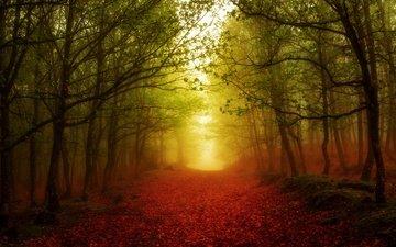 свет, дорога, деревья, лес, листья, туман, осень, цвет