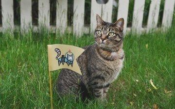 глаза, трава, кот, усы, кошка, взгляд, забор, флаг
