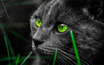 grass, cat, muzzle, mustache, look, green eyes, black cat