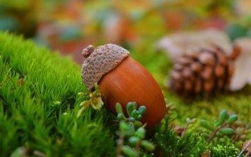 grass, nature, background, autumn, bump, acorn