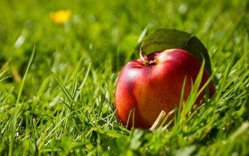 трава, фрукты, плод, нектарин