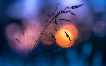 трава, вечер, солнце, природа, макро, фон, лето, блики