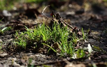 grass, earth, nature, greens, macro, background