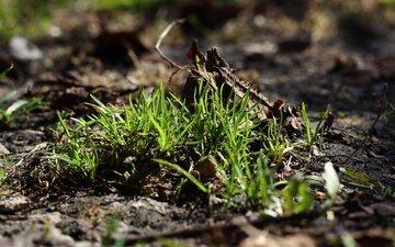 трава, земля, природа, зелень, макро, фон