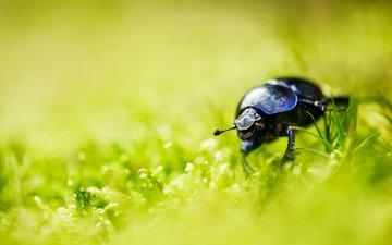 grass, beetle, insect, mustache, summer, legs
