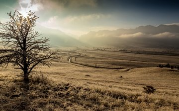 горы, дерево, утро, туман, поле