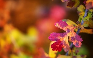 branch, leaves, macro, paint, autumn, sheet, blur
