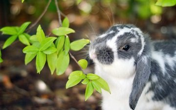 ветка, листочки, кролик, уши, нос