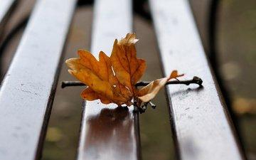 branch, autumn, sheet, bench, oak