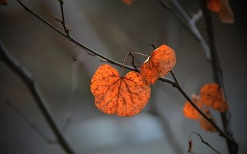 branch, nature, leaves, background, autumn