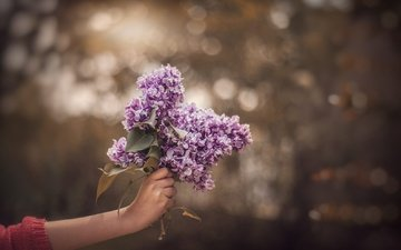 flowers, branch, hand, a bunch, lilac, bokeh