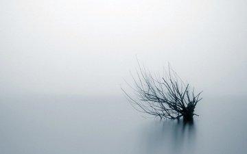 вода, природа, фон, туман, ветки, куст