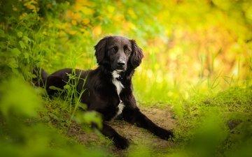 лес, взгляд, собака, весна, друг, бордер-колли, kedves tamara