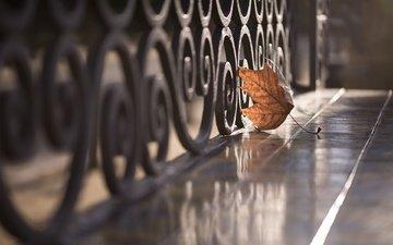 reflection, autumn, the fence, sheet, street