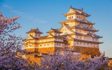 замок, япония, сакура, химэдзи
