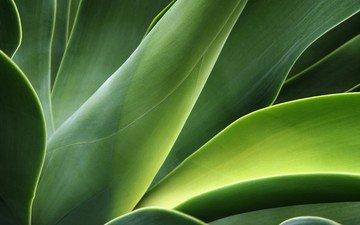зелень, листья, стебли, растение, изгибы
