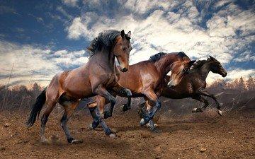 небо, облака, земля, поле, лошади, кони, бег