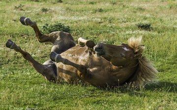 лошадь, трава, конь, грива, копыта, davide lopresti