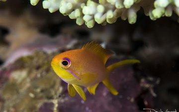 море, океан, рыба, подводный мир, davide lopresti