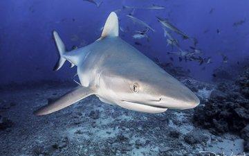 море, рыбы, океан, акула, подводный мир, davide lopresti