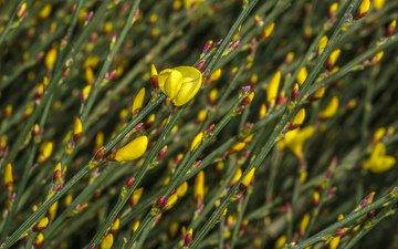 flowers, grass, field, plant, bokeh, jazzmatica