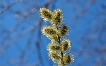 branch, blur, spring, verba, jazzmatica